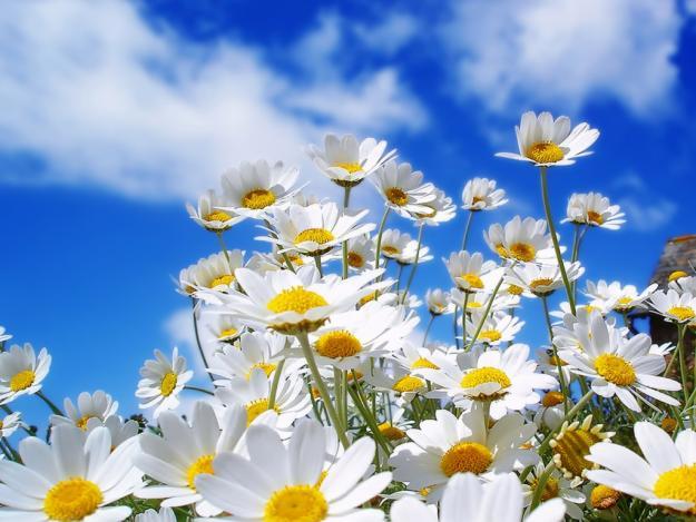Terapia Floral: Saiba como as flores podem melhorar sua vida!